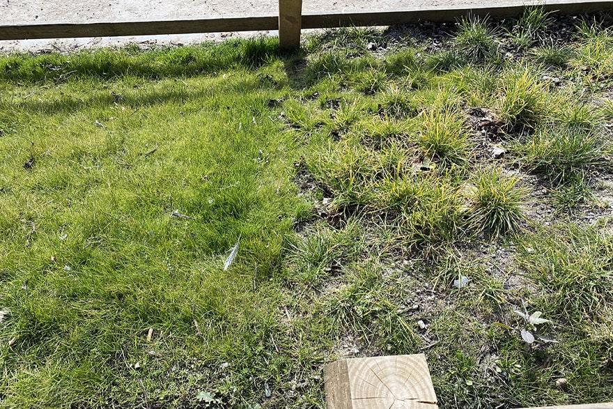 green-hybrid-grass-1